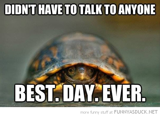 funny-turtle-sheel-didnt-talk-to-anyway-best-day-ever-pics